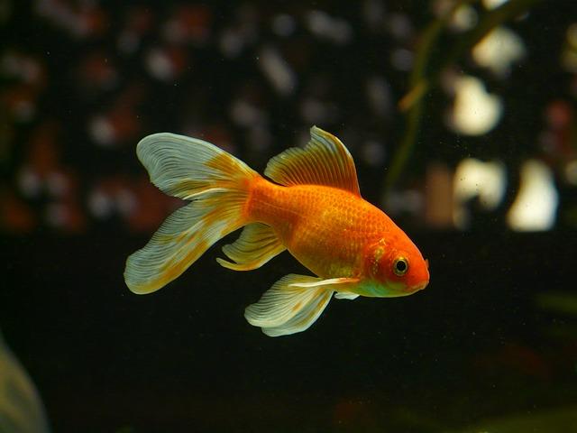 cambiare se stessi tecnica pesce rosso